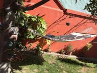 courtyard-hammock